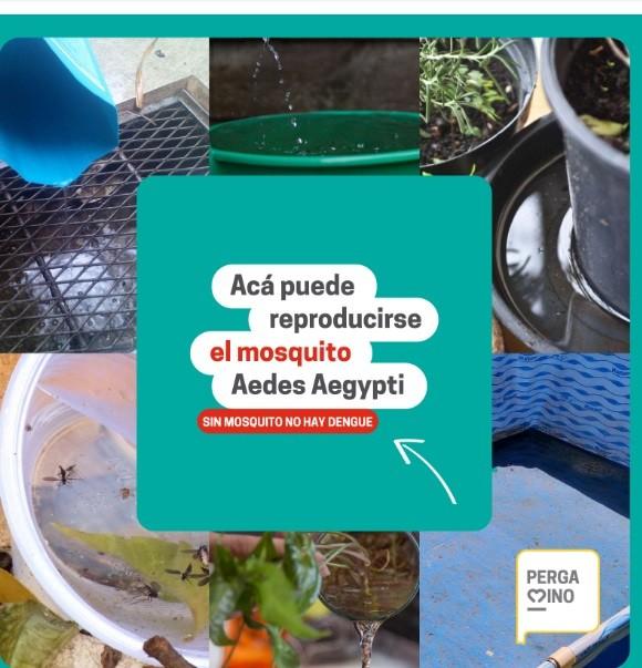 Saneamiento Ambiental brinda recomendaciones para evitar la proliferación de mosquitos