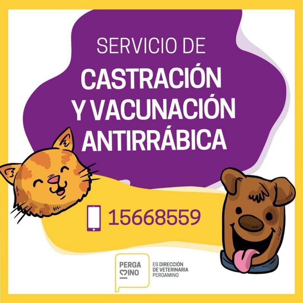 Castración y vacunación antirrábica